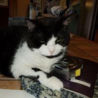 Client Interaction 3-Cat